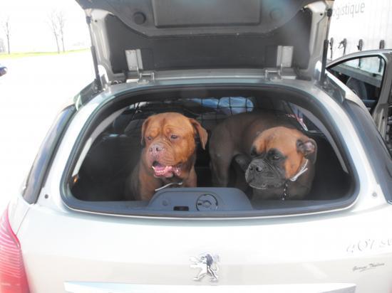 Soho et Sulky en route pour Marseille